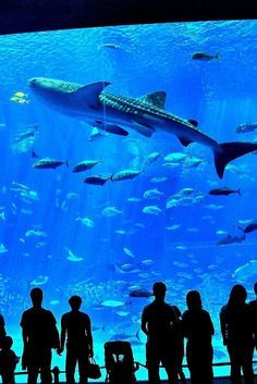 What NOT to Do in Okinawa   Matador: Mary Richardson breaks down the island's avoidable attractions…and what you should do instead. [Pictured above: The Okinawa Churaumi Aquarium is located within the Ocean Expo Commemorative National Government Park in Okinawa, Japan.]