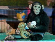 cute baby animals - Interspecies Love: Breakfast is Better With Friends