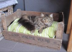 Kattenmand van een oud veilingkistje