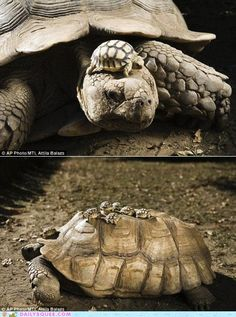Mommy tortoise and babies!