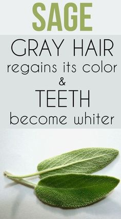 Sage – gray hair regains its color and teeth become whiter. Discover beauty recipes behind this plant Sage – gray hair regains its color and teeth become whiter. Discover beauty recipes behind this plant Natural Health Remedies, Natural Cures, Herbal Remedies, Natural Healing, Natural Beauty, Holistic Remedies, Natural Hair, Natural Treatments, Health And Beauty Tips