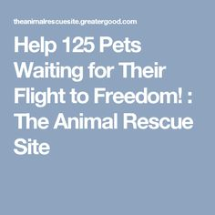 Help 125 Pets Waiting for Their Flight to Freedom! : The Animal Rescue Site