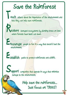An fantastic poster to get children thinking about what we can do to help save/preserve our rainforests. Why not use this as a stimulus for them to create their own posters, powerpoint presentations or persuasive adverts?