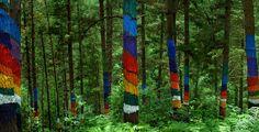 Descubre el bosque pintando de OMA en Urdaibai