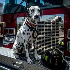 FEATURED POST  @myschabear -  All week I'm shooting the 2017 #firefighterswithoutborders calendar.  Sharing photos along the way here with the awesome Molly the Fire Dog!. . CHECK OUT! http://ift.tt/2aftxS9 . Facebook- chiefmiller1 Snapchat- chief_miller Periscope -chief_miller Tumbr- chief-miller Twitter - chief_miller YouTube- chief miller  Use #chiefmiller in your post! .  #firetruck #firedepartment #fireman #firefighters #ems #kcco  #flashover #firefighting #paramedic #firehouse #wod…