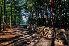 Lasy między Frywałdem a Nawojową Górą - fot. Marek Wojciechowski