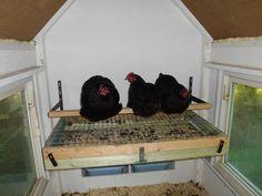Lotbunker Hühner