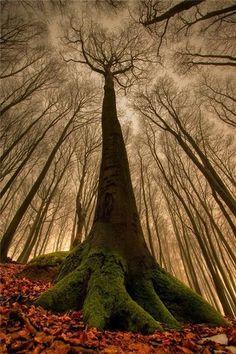 Natural beauty reaching toward the sky.