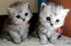 Cute pictures - animals - babies - kittens - puppies - Daily Cuteness