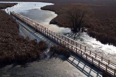 Point Pelee, Marsh Boardwalk