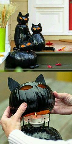 Halloween kitty's