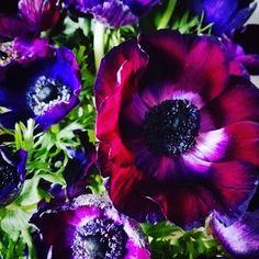 #anemones #darkflower #deeppurple #flowergram #flowerpower #prettypink #cologne #riehl
