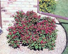 Don't use rock as a ground cover around trees and shrubs.