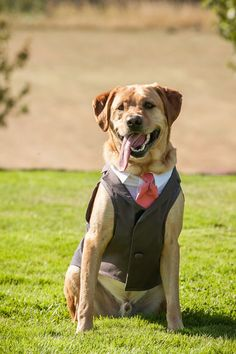 Dog Tuxedo  custom sizing  Charcoal by ArlaDesigns on Etsy, $198.00