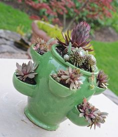 is 2013 the year of the succulent? - A Way to Garden. Using a strawberry pot for succulents
