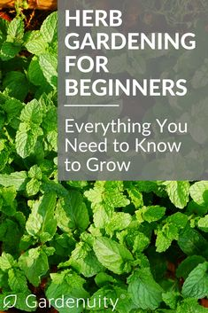 If you're new to gardening, an herb garden is an incredible way to step into the growing world. Herbs are particularly hardy and provide successful growers with quick and abundant harvests. Herb Garden Kit, Herb Garden Design, Garden Ideas, Herbs Garden, Vegetable Garden, Gardening For Beginners, Gardening Tips, Organic Gardening, Herb Guide