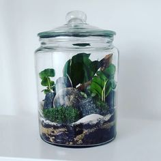 create a serene woodland setting, display miniature tropicalS or design a lovely fairy garden using plants, curios and found objects, such as pebbles and sea glass. Bottle Terrarium, Terrarium Diy, Plants In Bottles, Mini Plants, Deco, Sea Glass, Beautiful Homes, Cactus, Creations
