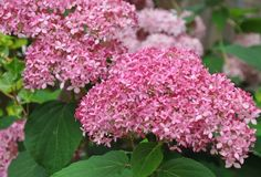 Core Mid-Summer Plants & Pretty Flowers Combinations