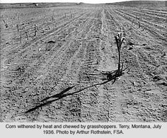 Grasshoppers thrive in the heat. Crops would be devoured by swarms in a few hrs.Terry, Montana, 1938. ALady