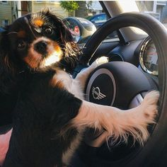 Mr.Brojangles - No time to esplain, just get in the car.