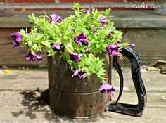 sifter planter