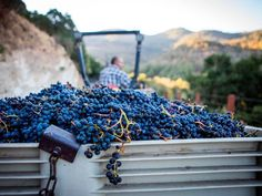 Top 10 vineyards and wineries in Napa Valley   California travel inspiration