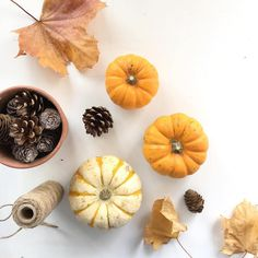 • Autumn things • morning all hope your having a super weekend, I'm faffing with these sweet little munchkin pumpkins before I roast them and turn them into soup. Autumn flat lays