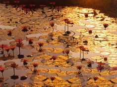 Lotus Pond Art Print, by Bruno Baumann. http://www.art.com/products/p10286593-sa-i1170700/bruno-baumann-lotus-pond.htm?rfid=220421