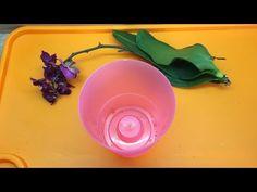 YouTube Orchids Garden, Tomato Plants, Garden Care, Vegetable Garden, Youtube, Dental Implants, Lawn And Garden, Yard Maintenance, Vegetables Garden