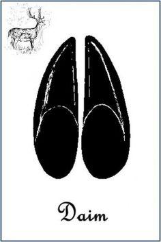 Daim (Dama dama) Bear Footprint, Montessori, Activities For Kids, Stencils, Google, Zoology, Animal Tracks, Fallow Deer, Wild Animals