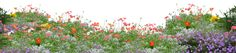 Poppies png by Kibblywibbly on DeviantArt