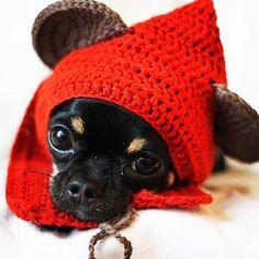 #ewok #starwars #crochet #starwarscrochet #ewokcrochet #dogcostume #dog #costume #ewokcostume
