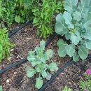 10 consejos para el riego en la huerta | #Huerto urbano - Huerto ecológico ecoagricultor.com