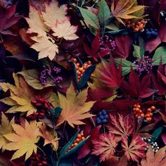 Autumnal leaves by photographer Tessa Traeger #food #art #berry #autumn #leaves
