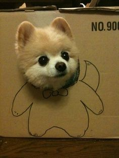 This is my halloween costume?! A dog poking its head through a box that has a body drawn on the cardboard.