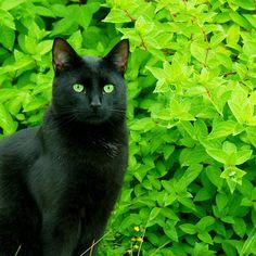 the bushes match my eyes via dreamaker2.tumblr.com