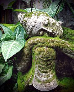 I find it amazing all the Buddha statues I look at that has him intertwined with plants. The plants never cover his face. Oh how I love me some Buddha.