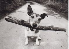 Postcrossing US-2598342 - Black and white card with a dog and a stick.  Sent to Postcrosser in Bulgaria.