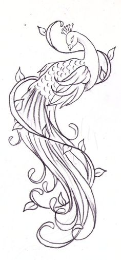 peacock tattoo sketch by *Nevermore-Ink on deviantART
