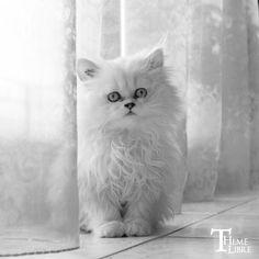 White Kitten! http://aguidetowhatsinsideyourbeautybag.blogspot.com/