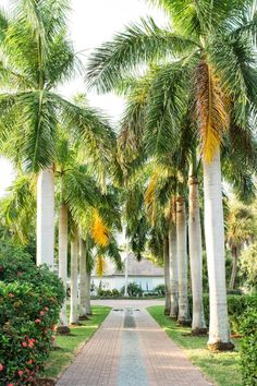Inspired by Mediterranean and Caribbean architecture, this grand Floridian front yard features giant royal palm trees and native plants.