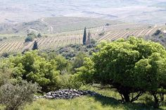 The Galil Mountain Winery.Galil Mountain Winery is situated in the mountains of the Upper Galilee. Israel