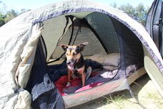 Tips for Summer Camping with your Dog