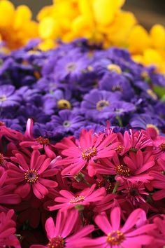 Flowers at the market, Sao Paulo, Brazil
