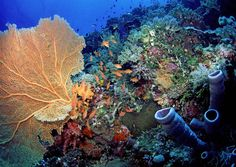 Changes in global climate will greatly affect aquatic life, particularly in the tropics.