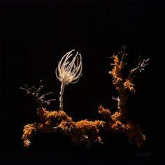 Es handelt sich um eine Pflanze mit knöchernem Skelett. Ein Organismus der Pflanze und Säugetier vereint.  Die Form steht für das Wesen der Botanik. Das Material steht für den Menschen.  Der Fokus der Botanik liegt im Wachsen. Im Streben nach Licht. Sie kennt keine Ablenkung von ihrem Streben, in das sie ihre ganze Kraft investiert. Der Fokus des Menschen liegt auf seiner Rolle in der Gesellschaft, in der Wirkung, die er auf andere erzielt.  Es bräuchte ein botanisches Denken. Form, Contemporary Art, Material, Plants, Botany, People, Plant, Modern Art, Planets