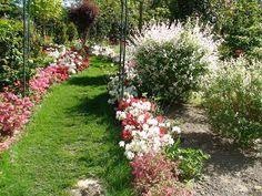 Testé et approuvé : la visite au Parc floral des Camellias de la Prairie à Alès... Lire notre témoignage : http://www.sortie-famille-gard.com/parc-floral-camellias-de-prairie/ Profitez-en... c'est la meilleure période!!!