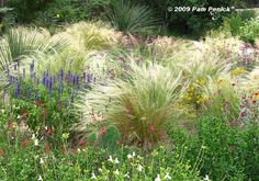 Tom Spencer's Tao of Texas gardening -- look to western edge of Hill Country for plants for our warming future.