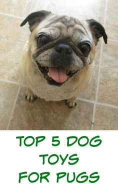 favorite dog toys for pugs. My pugs own too many dog toys, we've tried so many that fell apart or they just didn't play with. Here are our top 5 picks for favorite dog toys that last.