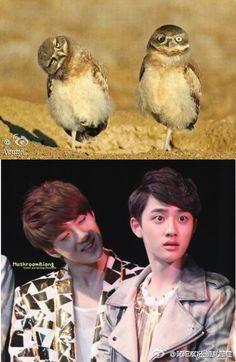 EXO Facts - exo kai sehun baekhyun facts kyungsoo suho - Asianfanfics.com